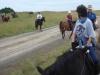 horsetrails2