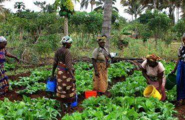 african-farming