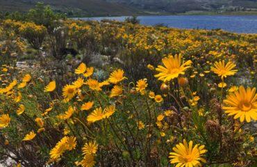 elgin-valley-spring-flowers