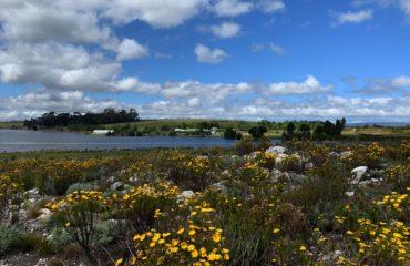elgin-valley-spring-scene